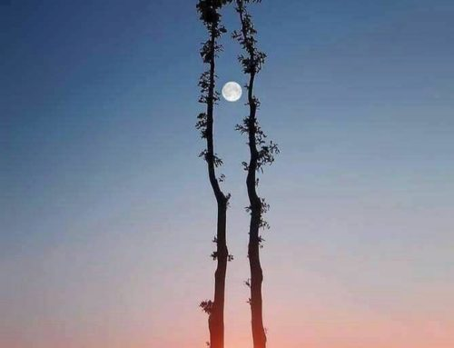 L'alignement