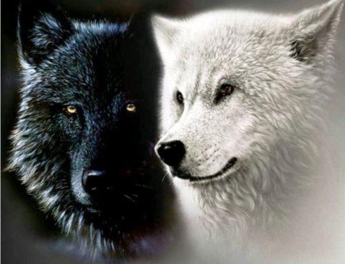 L'histoire des deux Loups
